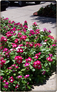 Qualicare Flowers