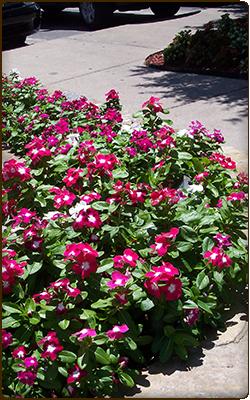 qualicare lewisville flowers