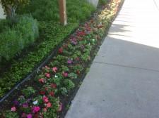 Qualicare Landscape Maintenance Irrigation Services 50