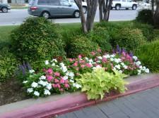 Qualicare Landscape Maintenance Irrigation Services 10
